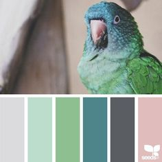 today's inspiration image for { color creature } is by @ashleightmc ... thank you, Ashleigh, for sharing your wonderful photo in #SeedsColor !