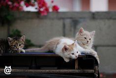So pretty! #cute #kitten #cats #fluffy
