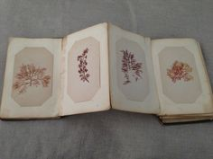 1876 Rare Pressed Seaweed Album, Rockport Massachusetts, 50 hand mounted plate