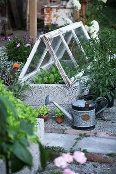 little greenhouse...old windows & concrete blocks