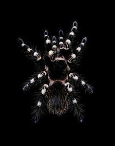 Turantula