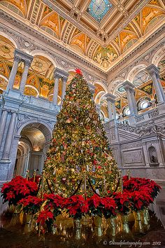 Christmas Tree of Knowledge - Library of Congress, Washington, DC