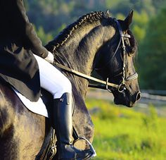 Equestrian Sonoma Scent Studio-With top notes of apple and grass, heart notes of leather, hay, and violet, and base notes of sandalwood, cedar, moss, and light amber, Equestrian is an outdoorsy yet civilized take on a hay and leather theme.
