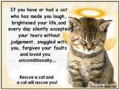 If you have or had a cat who has made you laugh, brightened your life, and every day silently accepted your tears without judgement, snuggled with you, forgiven your faults and loved you unconditionally.....Rescue a cat and a cat will rescue you !