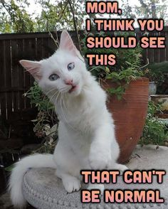 #boothedeafkitty #fun #cute #cat #kitten #meme #funny