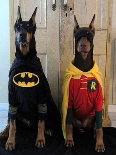 Cool, crazy and funny ideas for you to dress up your doggies this next Halloween. Check out more at www.barkingtails.com