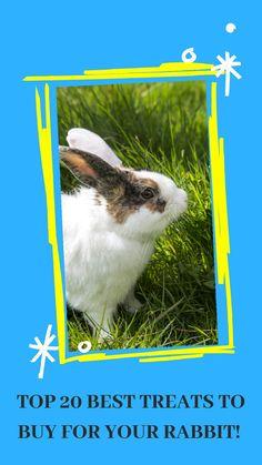 Rabbit Litter, Rabbit Toys, Pet Rabbit, Bunny Care, Bunny Bunny, Rabbit Nail Clippers, Wooden Rabbit, House Rabbit, Boredom Busters