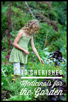 Top Ten Medicinal Herbs for the Garden // Blog Castanea  #herbs #herbgardening #herbal