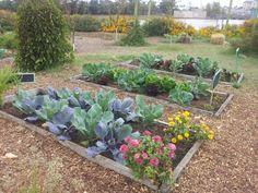 Garden Plants, Anna, Gardening, Gardens, Lawn And Garden, Horticulture