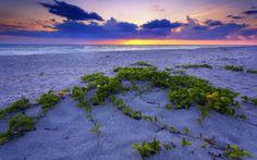 песок, закат, море, растения, пейзаж