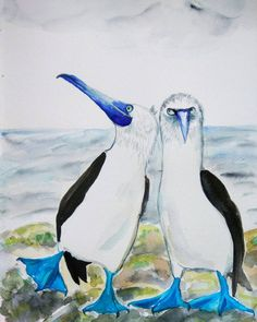 Blue-footed Boobies original watercolor painting. Funny birds