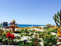 My garden Baja California Mexico  Low maintenance