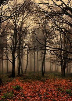 foggy forest by pauljavor