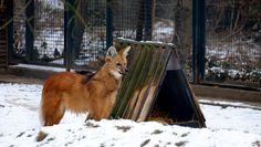 """Mein @Behance-Projekt: """"Leipzig-Zoo-Tiere"""" https://www.behance.net/gallery/58436171/Leipzig-Zoo-Tiere"""