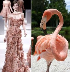 Wild Animal Runways - Haute Couture Spring 2011 Shows in Paris Get Wild (GALLERY)