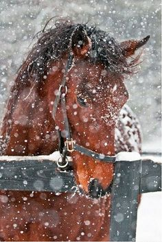 a horse outside on a snowy day, always looks SO pretty! … a horse outside on a snowy day, always looks SO pretty! All The Pretty Horses, Beautiful Horses, Animals Beautiful, Majestic Horse, Beautiful Beautiful, Farm Animals, Animals And Pets, Cute Animals, Pretty Animals