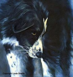 Fascinated, Border Collie, archival dog print by Linda Shant8