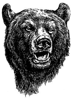 bear head drawing - Google Search