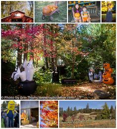 Fall Activities in Nevada City & Grass Valley, pumpkin farms, Halloween, wine tastings, art tours and more!