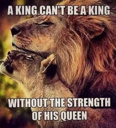 Wisdom Quotes, True Quotes, Great Quotes, Inspirational Quotes, Qoutes, Motivational, Funny Quotes, Lioness Quotes, Lion And Lioness