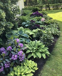 Shade Landscaping, Front House Landscaping, Outdoor Landscaping, Outdoor Gardens, Garden Yard Ideas, Lawn And Garden, Garden Projects, Shade Garden Plants, Plantation