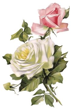 Get your hands on a customizable Old postcard from Zazzle. Find a large selection of sizes and shapes for your postcard needs! Flower Images, Flower Pictures, Flower Art, Decoupage, Romantic Roses, Beautiful Roses, Rose Clipart, Birthday Thank You Cards, Birthday Postcards