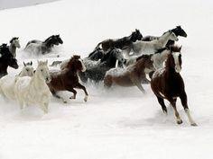 """""""Non puoi domare un cavallo selvaggio, lo uccideresti e gli toglieresti la libertà di essere com'è. Però, se vuoi, puoi imparare a corrergli affianco, imparando cosa sia quell'infinito brivido chiamato libertà."""" (Paulo Coelho)"""