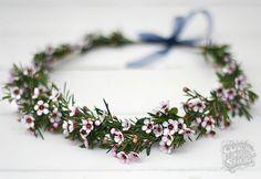 Wax flower native shrub flower crown