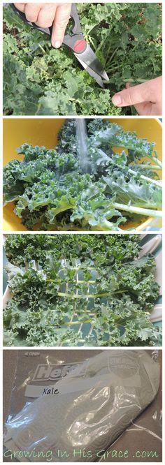 How to harvest and store kale three different ways (properly).