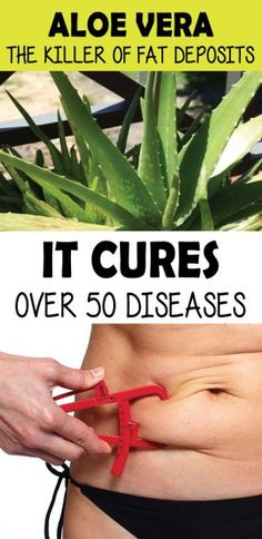ALOE VERA THE KILLER OF FAT DEPOSITS, IT CURES OVER 50 DISEASES