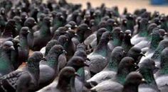 Čekající dav na odhalení pomníku Klause