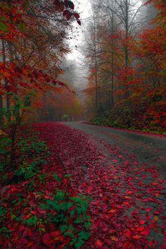 ~~The road between dream and life | autumn, Bolu, Turkey | by Zeki Seferoglu~~