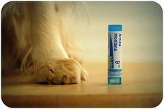 Soigner son chien à l'homéopathie