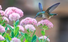 Learn about the types of food and shelter that go into creating a bird-friendly habitat. The Old Farmer's Almanac presents a guide to attracting birds to your garden.