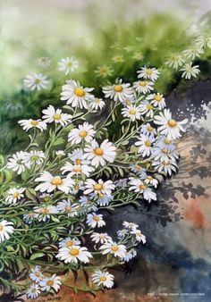 Miroonamoo Art Art Drawings Simple, Art Painting, Botanical Painting, Daisy Art, Floral Art, Painting Art Projects, Watercolour Inspiration, Water Painting, Floral Watercolor