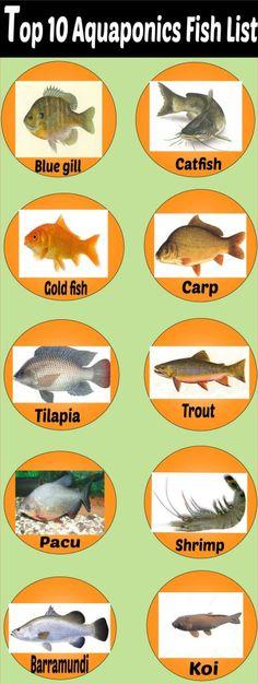 aquaponics fish species