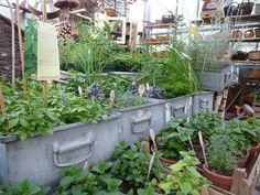 druga strona ogrodu: rok w szkółce