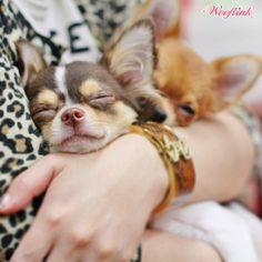 WOOFLINK - Hip designer dog clothes: THE BIGGIEST DISTRACTION ♥