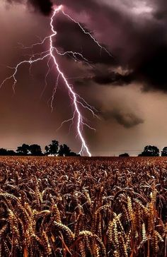 Lightning over a Field                                                                                                                                                                                 More