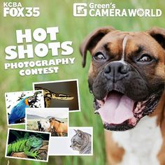 You could win a $1,000 gift certificate to Green's Camera World!!! Just click the link in our bio to share amateur photos of your favorite animal or pet to enter! We'll pick the top 20 photos and feature them right here on KCBA FOX 35 and one lucky photographer will win a $1,000 gift card to Green's Camera!! #calocals - posted by  https://www.instagram.com/kcba.fox35 - See more of Big Sur, CA at http://bigsurlocals.com