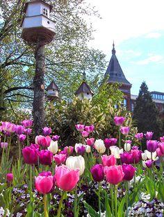 dovecotes & tulips