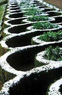 Topiary Hedge in Winter Garden