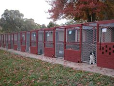 Dog Boarding Kennel Designs | Alpha Boarding Kennels - the pens