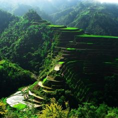 Philippines : Rice Terrace Fields in Banaue