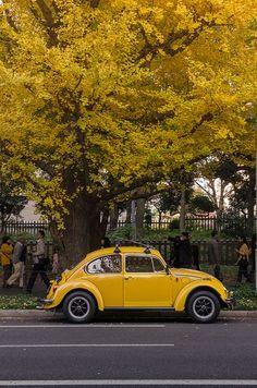 "My dream car has always been a classic beetle. @Vanessa Vasquez @priscilla mercado - remember grandpa had his and he called it(and Tib) ""Bocho""?lol #Yellow"