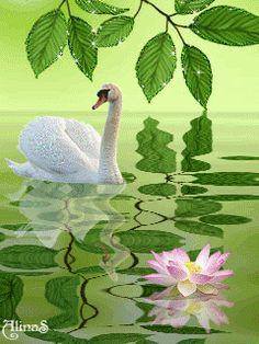 Белый лебедь на пруду ... (качает павшую звезду ...)