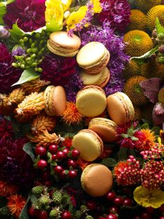 Macaron Autumn Garden: Pumpkin, cinnamon and allspice, pieces of whole corn. Pierre Hermé October 2014 / Photo: Laurent Fau & Food design: Coco Jobard