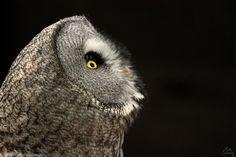 """Owl - """"I'm waiting"""""""