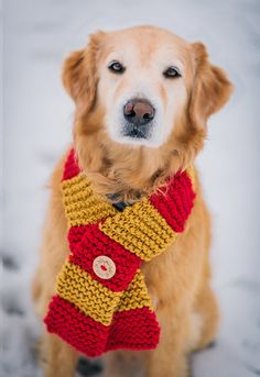 Dog Clothes Dog Scarf in Gryffindor House colors by PattyMacKnits