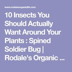 10 Insects You Should Actually Want Around Your Plants : Spined Soldier Bug | Rodale's Organic Life